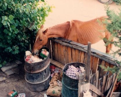 horse215